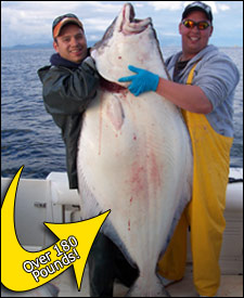 Over 180 pound Halibut caught with HAIDA Fishing Charter guided day tours in Prince Rupert BC.Halibut,Salmon,Cod,Snapper, sportfishing